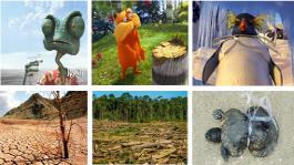 Escena de Rango (A) y consecuencias de la sequía (B). Escena de Lórax (C) y tala de un bosque (D). Escena de Happy Feet (E) y consecuencia de la contaminación marina (F).