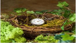 Reloj de cuerda sobre nido